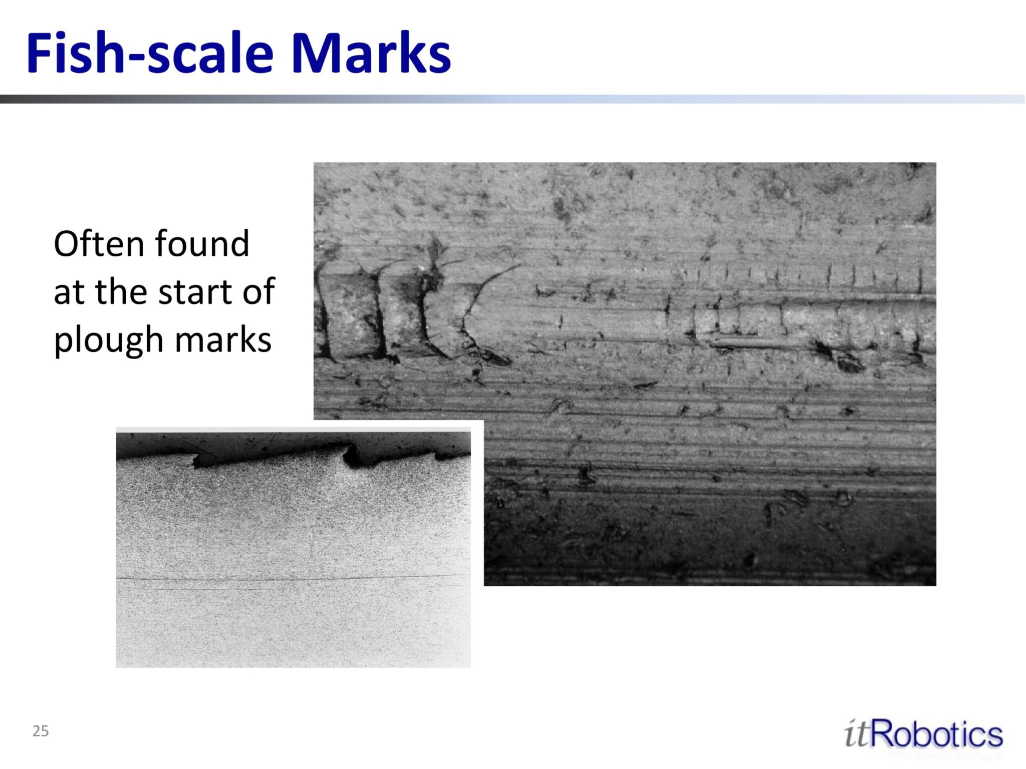 Fish-scale Marks